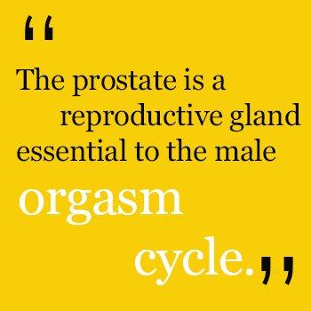 orgasm-cycle