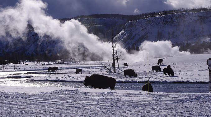 Winter Yellowstone