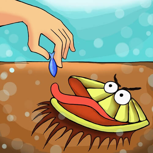 Feeding the bearded clam