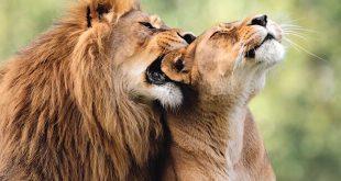 Strange Sex Habits in the Animal Kingdom