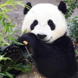 10 Modes de Reproduction Animale à Rendre Absolument Heureux d'Être Humain
