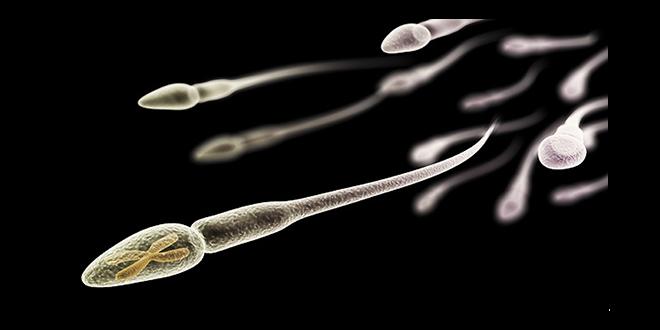 les faits surprenant sur le sperme