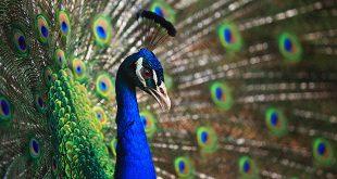 Alcuni tra i più strani rituali di accoppiamento del regno animale
